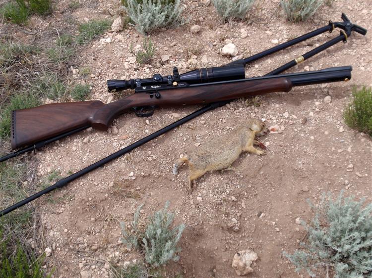 Dudo kemol more to air rifle hunting