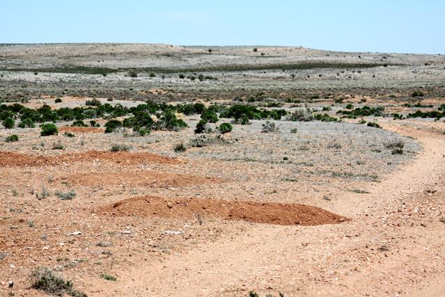 P-dog mounds