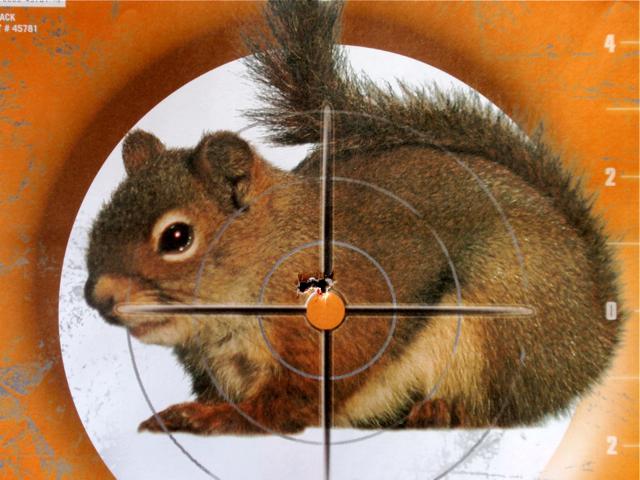 AA 510 carbine target
