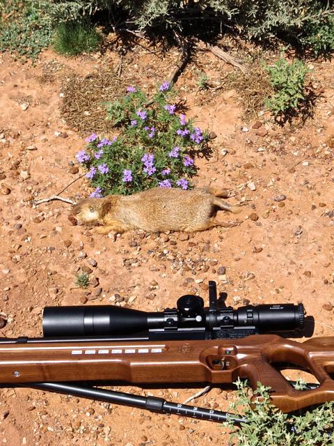 P-dog, rifle, flower
